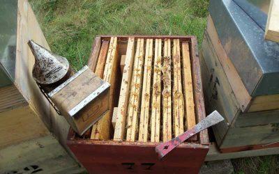 C'est le printemps ! Il est temps de visiter les ruches !