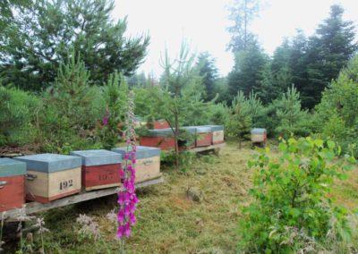 notre rucher de Raon l'Etape