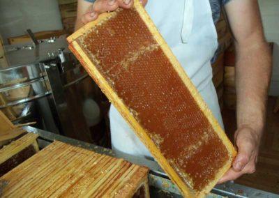 Cadre de miel de châtaignier désopperculé