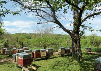 un de nos ruchers en Meurthe et Moselle