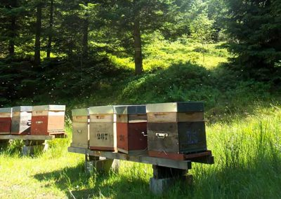 un de nos ruchers dans les Vosges
